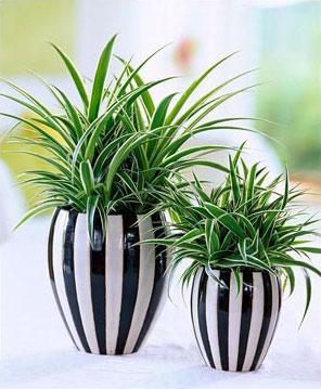 Комнатные растения в комнате ребенка