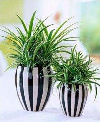 Комнатные растения для детской.