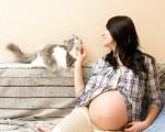 Кошка дома у беременной: опасно ли?